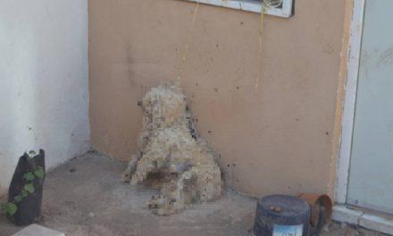 Abandonan a perrito atado a una cuerda y muere ahorcado… Testigos de Jehová lo encuentran