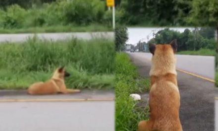 Perrito espera por meses en la carretera a que su amo regrese por él