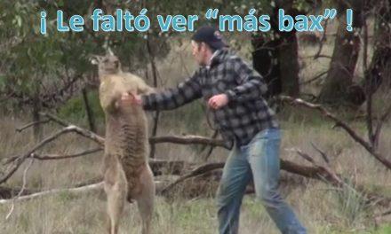 """Noquea a canguro para defender a su perro…Al canguro le faltó ver """"más bax"""""""