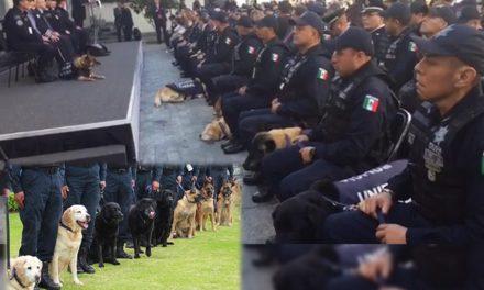 Con lágrimas y aplausos jubilan a agentes caninos por años de servicio ¡Los podrás adoptar!