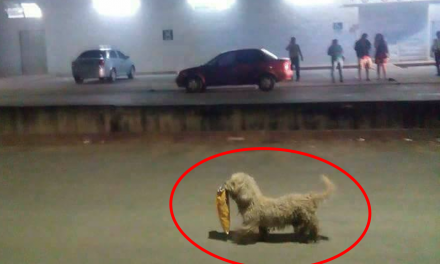 """Perrito se """"aprovecha"""" de los saqueos ¡Y se vuelve viral! #Saqueadorcito"""