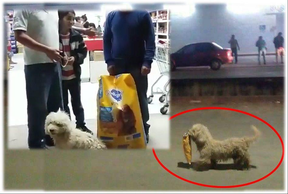 """¿Recuerdas al perro """"Saqueadorcito""""? ¡Tienda """"vandalizada"""" le regala croquetas y papitas!"""