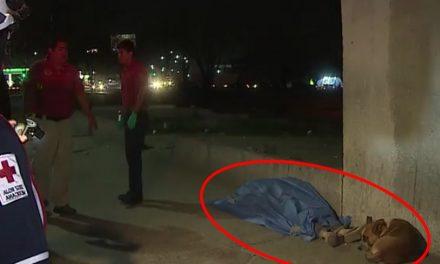 Perrito se niega a abandonar a su amo que murió en las calles de Monterrey