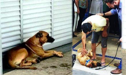 ¡Qué belleza! Perrito espera más de una semana a su amo afuera del hospital