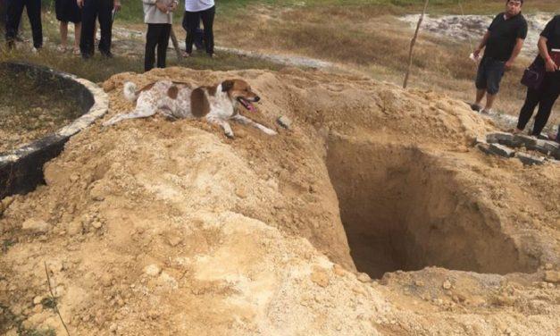 Perrito corre más de 3,000 metros atrás de la carroza fúnebre donde iba su ama (VIDEO)