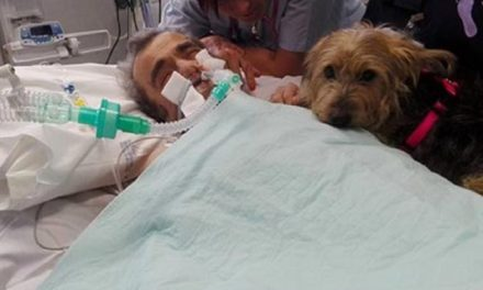 Hombre estaba en coma y no reaccionaba ¡Hasta que le llevaron a su perrita!