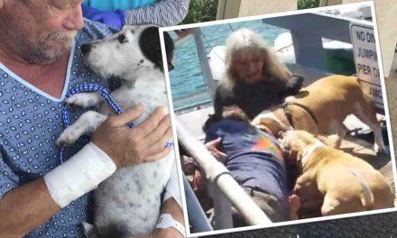 No le importó exponer su vida para salvar a su perrito del feroz ataque de Pitbulls