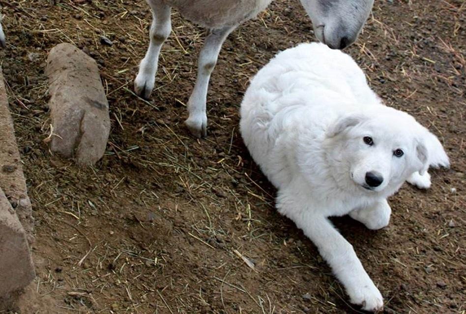 Por orden de un juez, cortarán las cuerdas vocales a seis perros