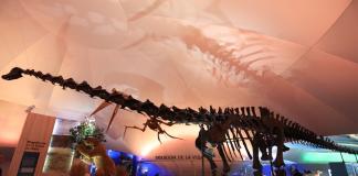 museo historia natural cdmx