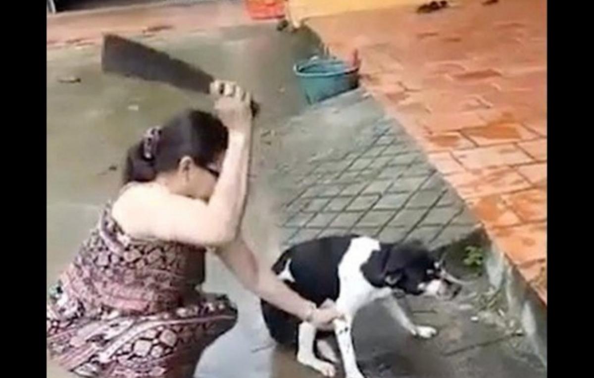 Acto de crueldad, mujer le cortó la pata a su mascota